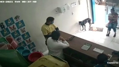 perrito-de-la-calle-entra-a-veterinaria-para-que-lo-ayuden