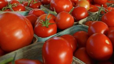 EU-suspende-importación-de-tomates-de-empresa-mexicana
