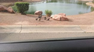 Saw these on the way to the hash...looks like they're growing up. :)
