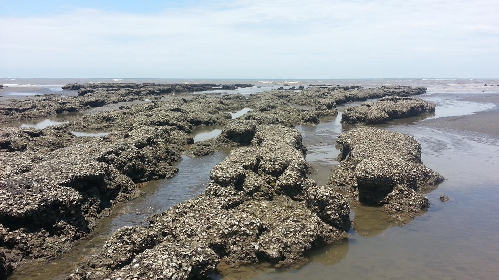 桃園藻礁分佈 - 桃園藻礁