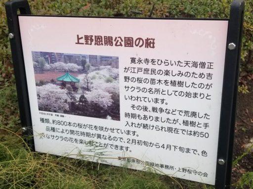 上野公園の桜についての看板