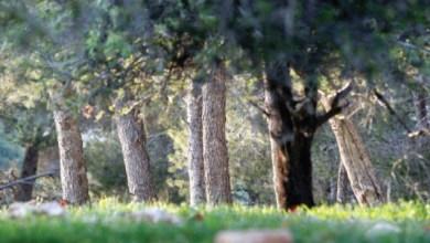 Photo of غابات الأردن