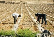 Photo of الموافقة على تعويض المزارعين المتضررين في حال وقوع مخاطر زراعية