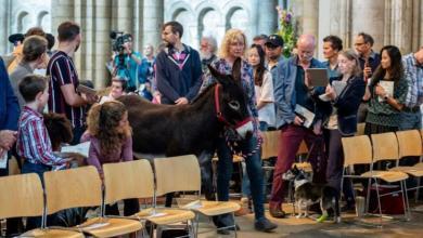 Photo of مئات الحيوانات تشارك في جنازة قط – صور