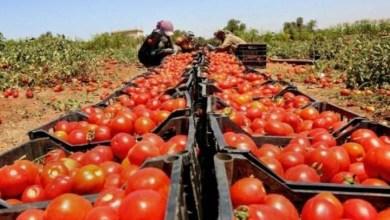 منتجات فلسطينية يمنع الاحتلال تصديرها عبر الاردن