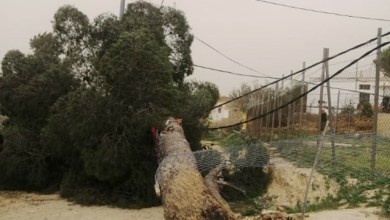 Photo of الرياح تقتلع 3 أعمدة كهرباء في الديسة وانقطاع الكهرباء عن المنطقة