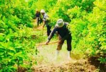 Photo of تخفيض رسوم تصاريح العمال غير الأردنيين في قطاعي الزراعة والمخابز