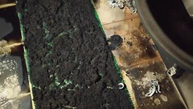 Photo of مستوطنون يحرقون مسجدا وسط الضفة الغربية
