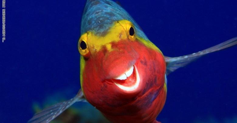 Photo of من سمكة مبتسمة إلى راكون متدلي.. جائزة كوميديا الحياة البرية للتصوير الفوتوغرافي