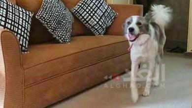 إربد: نتائج فحوصات الكلب التي أعيد تكرارها سلبية -(الغد)