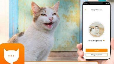 Photo of مياو توك: تطبيق جديد من أليكسا أمازون يترجم مواء قطتك