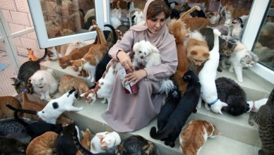Photo of عُمانية تحول بيتها ملجأ لـ 480 قطا و 12 كلبا (صور)