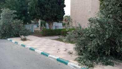 """Photo of إزالة أشجار زيتون داخل جامعة اليرموك يثير استياء """"هيئة التدريس"""""""