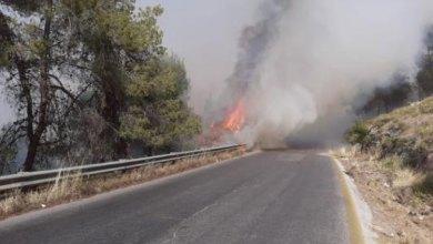 Photo of غابات جرش: 30 حريقا تحول 1300 دونم إلى جرداء العام الحالي