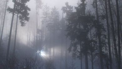 """Photo of هل نقترب من معرفة حقيقة """"ظهور أجسام طائرة مجهولة"""" في غابة بريطانية؟"""