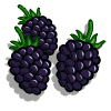 Black Berries Categoria: Fruits Coste: 75 Tiempo crecimiento: 4 Horas 7 Segundos Monedas que produce: 117 XP que produce: 1 Tamaño: 4x4