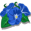 Morning Glory Categoria: Flowers Coste: 60 Tiempo crecimiento: 12 Horas 22 Segundos Monedas que produce: 123 XP que produce: 1 Tamaño: 4x4