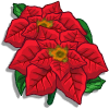 Poinsettia Promoción: Winter Categoria: Flowers Starts: 12/01/2009 Ends: 01/02/2010 Coste: 45 Tiempo crecimiento: 23 Horas Monedas que produce: 126 XP que produce: 3 Tamaño: 4x4
