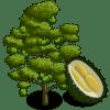 Durian Tree Regalo Monedas que produce: 65 Se vende por: 65