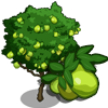 Guava Tree Regalo Monedas que produce: 55 Se vende por: 34