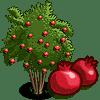 Pomegranate Tree Regalo Monedas que produce: 108 Se vende por: 54
