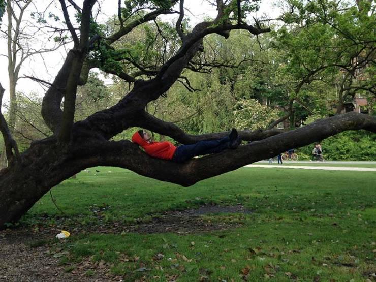 Alvaro en un árbol
