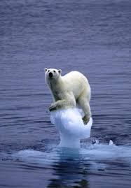 ours sur glace