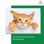 Doa Kucing untuk Orang yang Menyayanginya