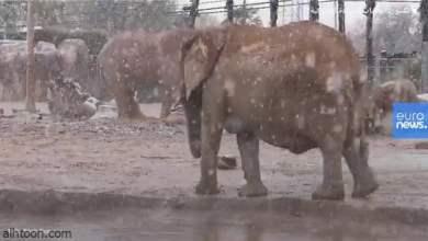 شاهد: أفيال تستمتع بالثلج - صحيفة هتون الدولية