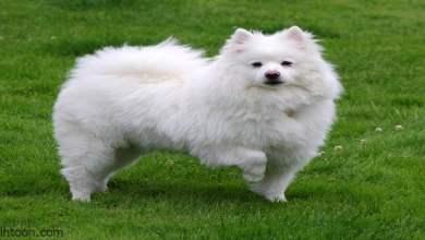 شاهد: كلبة تنقذ صديقتها العمياء - صحيفة هاون الدولية -