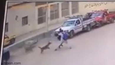 فيديو: دهس طفل في مصر .. والسبب كلب! - صحيفة هتون الدولية