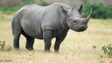 شاهد: تنكر أطفال بزي وحيد القرن .. وهذا ما فعلوه - صحيفة هتون الدولية