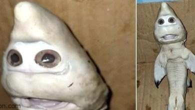 شاهد: صياد يصطاد سمكة غريبة من قاع البحر - صحيفة هتون الدولية
