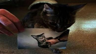 عودة قطة مفقودة إلى منزل أصحابها بعد 15 عاما من الغياب -صحيفة هتون الدولية