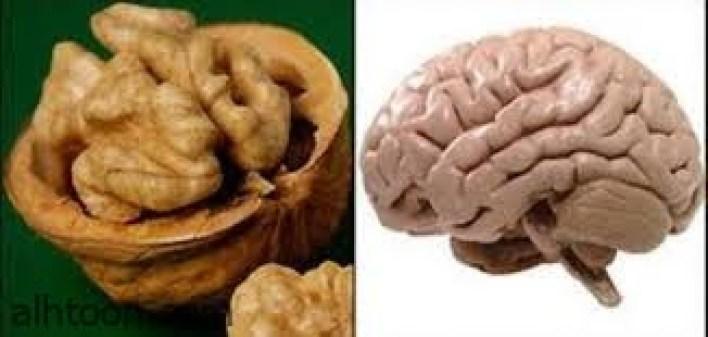 عين الجمل وفوائده للمخ والذاكرة -صحيفة هتون الدولية-