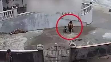 شاهد: أم تحتضن وتحمي صغيرها أثناء سقوط شجرة! - صحيفة هتون الدولية
