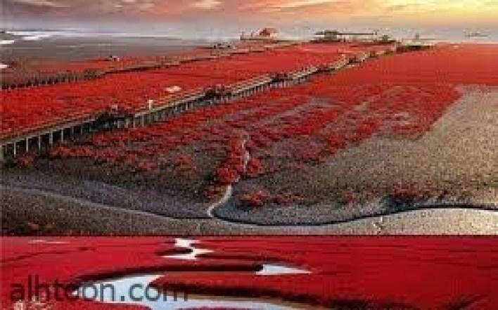 الشاطئ الأحمر في الصين -صحيفة هتون الدولية