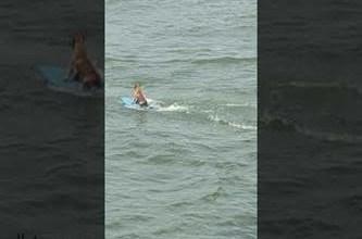 فيديو: كلب يتزلج على الماء - صحيفة هتون الدولية