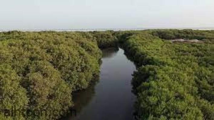 أجمل غابات حول العالم -صحيفة هتون الدولية