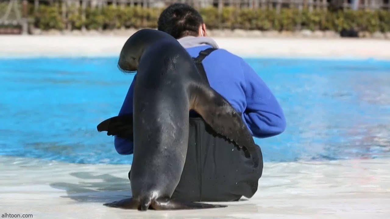 شاهد: أسد البحر يلهو مع حارس - صحيفة هتون الدولية