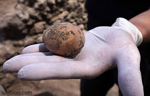 شاهد: بيضة دجاجة عمرها 1000 عام - صحيفة هتون الدولية