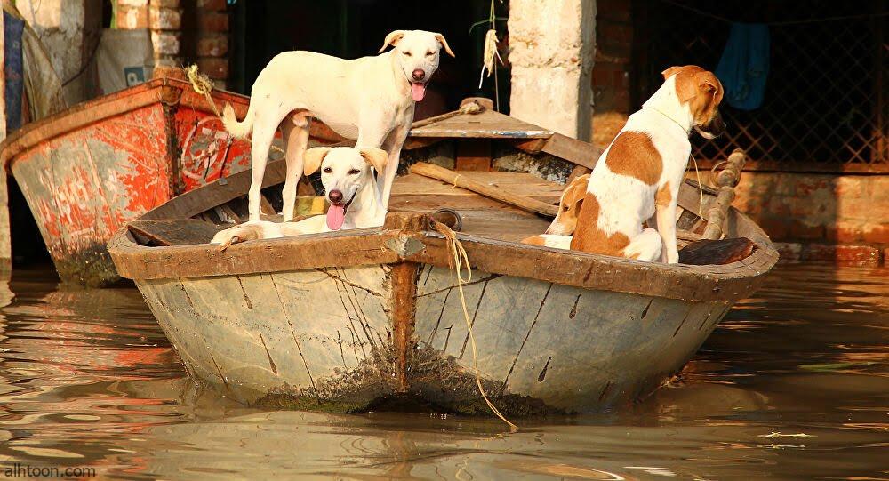 شاهد: كلب يجلب الماء لأقرقانه - صحيفة هتون الدولية