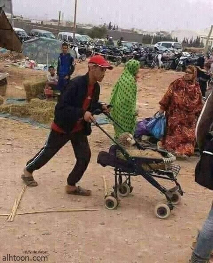 صور طريفة لا تجدها الا في تونس -صحيفة هتون الدولية