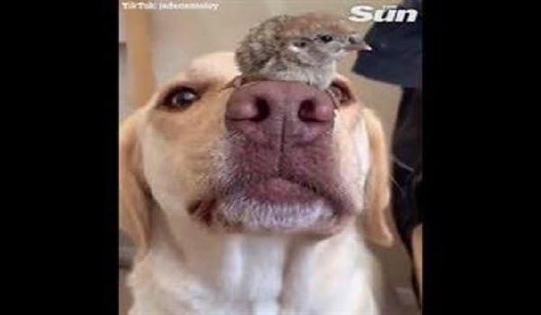 شاهد: صداقة بين كلب وطائر - صحيفة هتون الدولية