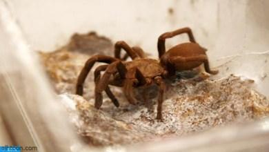 شاهد: كيف تخرج العناكب الوليدة للحياة - صحيفة هتون الدولية