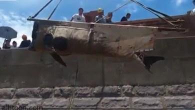 شاهد: نزوح الحيتان على شواطئ الصين - صحيفة هتون الدولية