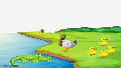 قصة ( التمساح والبطة )