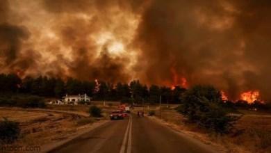 لحظة التهام الحرائق منازل كاليفورنيا - صحيفة هتون الدولية