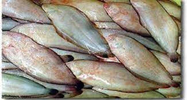 فوائد سمك موسى الصحية -صحيفة هتون الدولية-