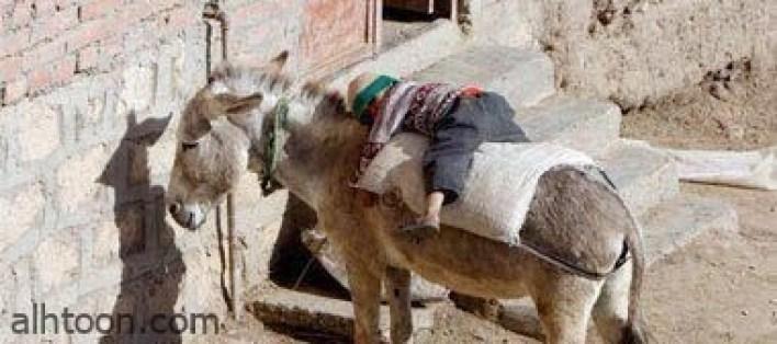 طرائف و عجائب المصريين -صحيفة هتون الدولية